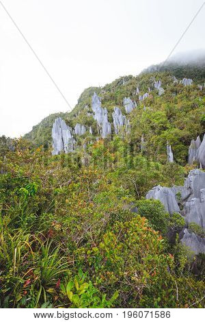 limestone pinnacles formation at gunung mulu national park borneo malaysia