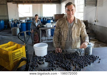 Portrait of worker checking a harvested olives in factory