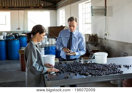 Manager instructing worker while checking a harvested olives in factory