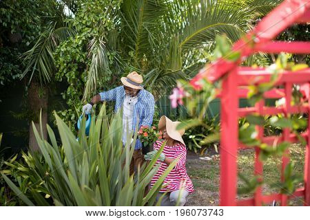 Couple watering plants while gardening in yard