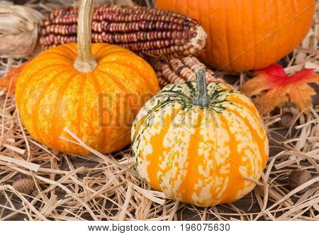 Colorful autumn gourds with corn cob on a straw surface