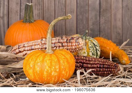 Colorful gourds and corn on straw with a wood background