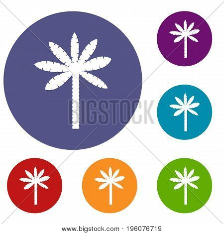 Palm tree icons set in flat circle red, blue and green color for web