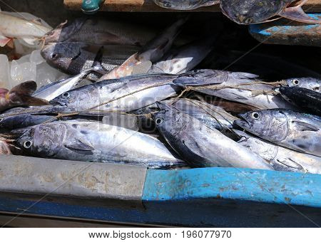Fresh Fish at a market in El Salvador