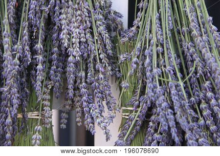 Lavender on sale at a farmers market