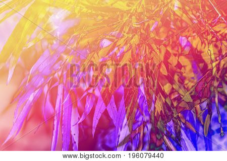Artistic background with plants and bamboo leaves