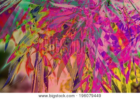 Artistic natural background with plants and bamboo levaes