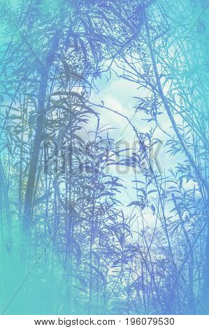 Artistic natural blue background with plants and trees