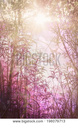 Artistic natural pink background with plants and forest