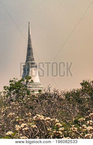 pagoda in sunlight sky and white frangipani vertical