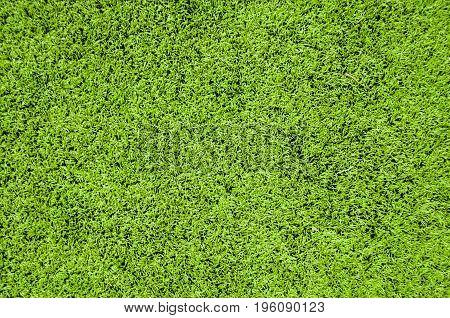 Close up Green artificial grass textures background.