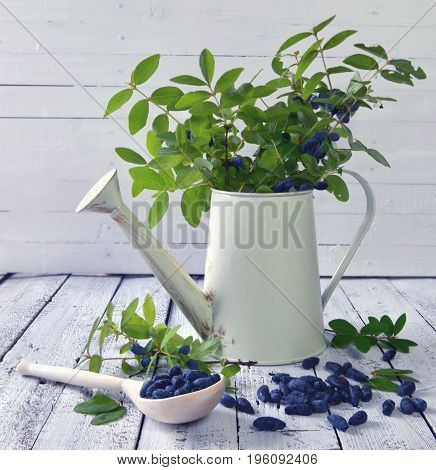 Still life with watering can and honeysuckle branches. Beautiful summer vintage background, vegetarian and vegan concept, rural still life with berry and flowers