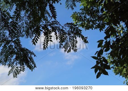 Green leaves sillouette across the blue sky.