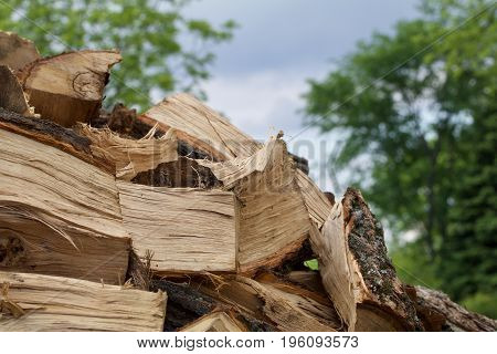 A stack of cut and split oak appears against the sky.