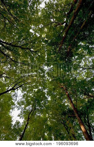 The summer trees form a green canopy.
