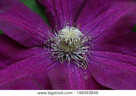 A purple flower is brightly lit in the garden.