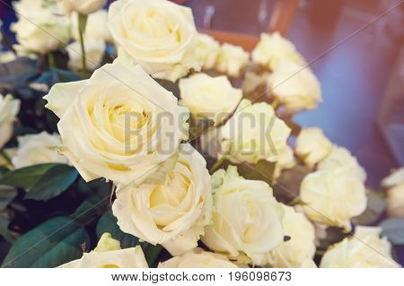 On the background of large white flowers roses.Toned. Art. The horizontal frame.