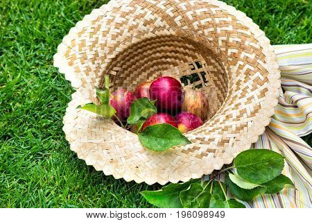 Apples in a straw hat with tablecloth. Fruit on green fresh grass in the garden.