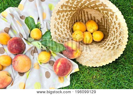 Apricots and peaches in straw hat with a tablecloth. Fruit on green fresh grass in the garden.