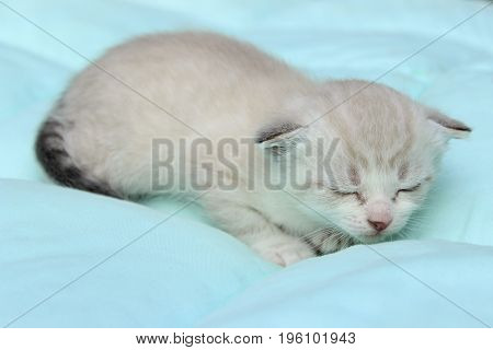 Cute little Kitten Sleeping on the Bed.