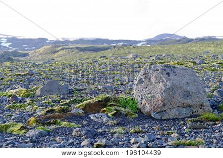 Vast Flat Area With Green Moss And Gravel