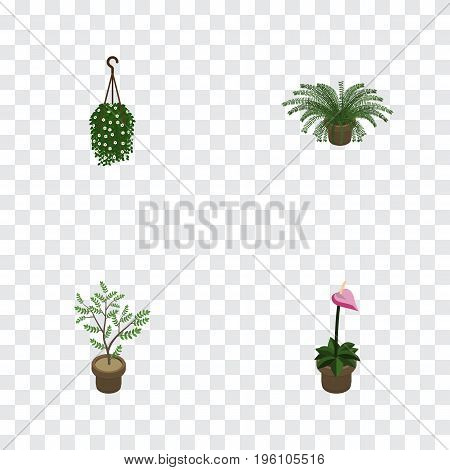 Isometric Flower Set Of Fern, Blossom, Grower And Other Vector Objects