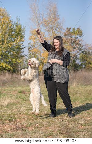 Dog jump for a stick from a trainers hand