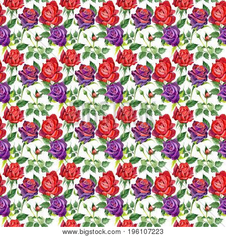 Wildflower rose flower pattern in a watercolor style.