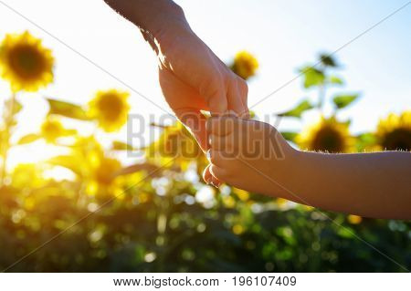 Hands of mother and son holding each other on the field of sunflowers