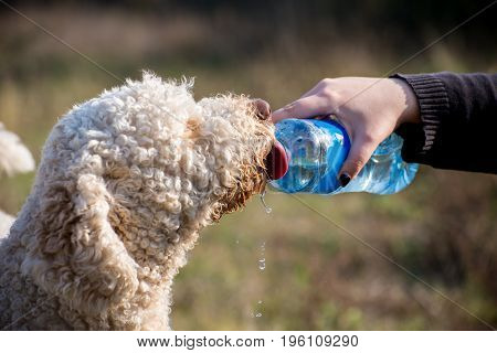 Thirsty dog drink watter from a bottle