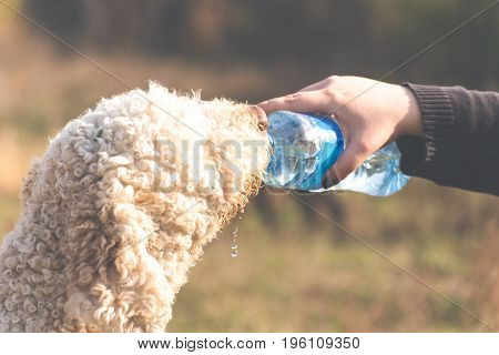 Thirsty dog drinks some fresh water from a bottle