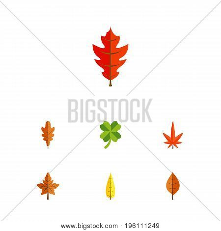 Flat Icon Maple Set Of Alder, Maple, Frond And Other Vector Objects