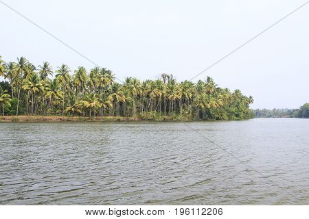 Tropical river at sunny day with palm