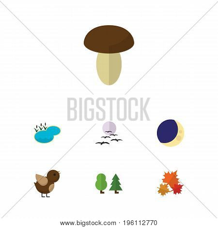 Flat Icon Ecology Set Of Canadian, Champignon, Half Moon And Other Vector Objects