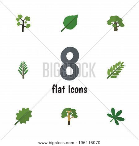 Flat Icon Bio Set Of Jungle, Tree, Alder And Other Vector Objects
