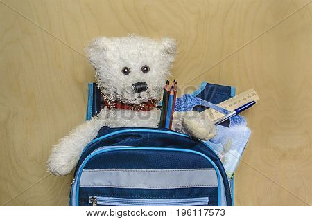 White Teddy bear sits in a knapsack with pencils pen notebook coloring will go to school