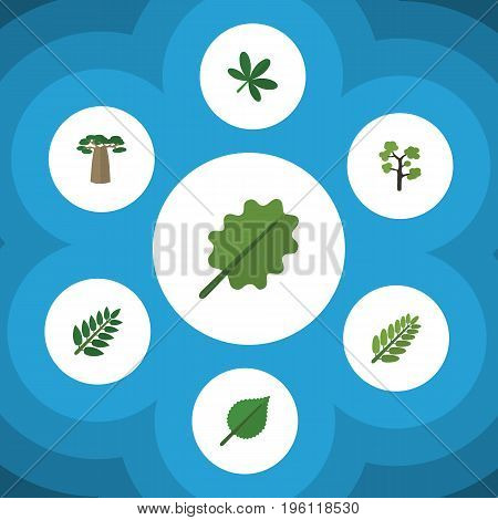 Flat Icon Bio Set Of Baobab, Maple, Acacia Leaf And Other Vector Objects