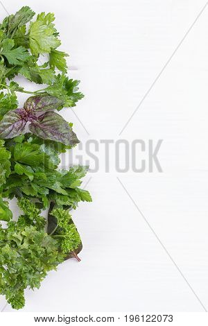 Fresh herbs frame : parsley dill celery thyme marjoram lovage tarragon sage place for text