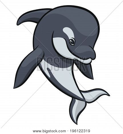 orca or killer whale - vector illustration