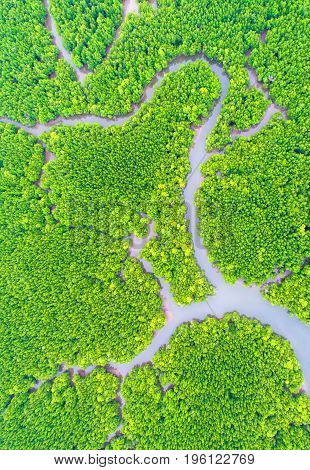top view tree and river beautiful background aerial view mangrove forest Natural grass textureblurred