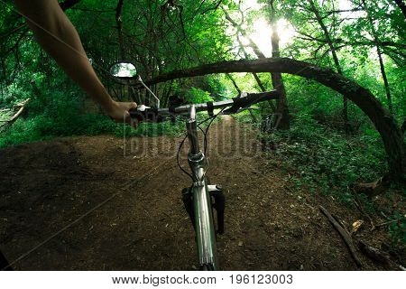 A cyclist rides a bicycle along forest trails