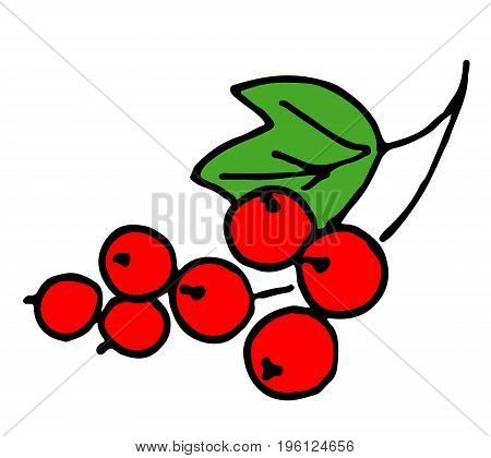 Berry Red Currant On A Green Branch On A White Background