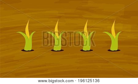 Corn growing in the farming field Vector. Agriculture and Farming. Agrotourism. Agribusiness. elements for info graphic websites and print medias