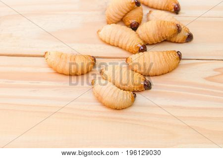 Red palm weevil on the wooden floor background(Rhynchophorus ferrugineus) Larvae of insects Selective focus with shallow depth of field
