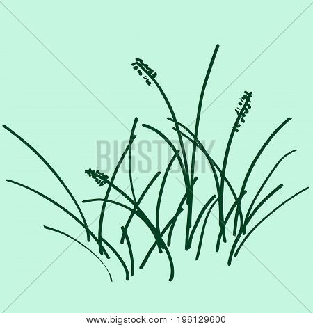 Sketch a bunch of grass. vector illustration. Drawing by hand