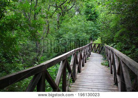 wooden bridge road in a rainforest landscape 1