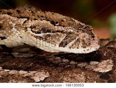 snake head snake skin close look reptile
