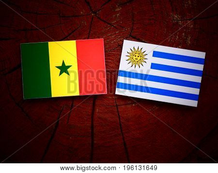 Senegal Flag With Uruguaian Flag On A Tree Stump Isolated