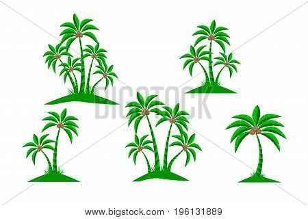 Palm trees isolated on white background. Beautiful vector palm tree set vector illustration