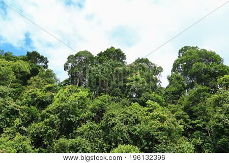 rain forest tropic landscape under sunlight in the summer with blue sky background